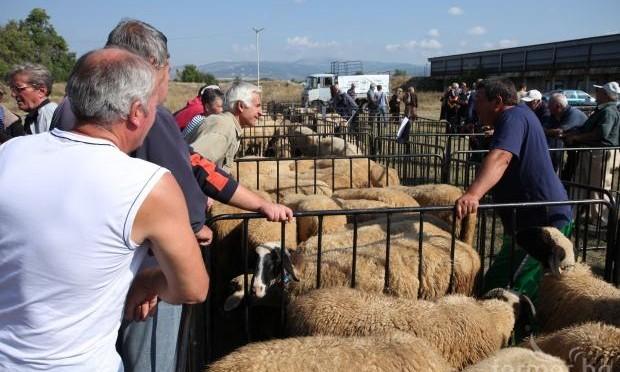 Девети национален събор за опазване на местните български, селскостопански породи