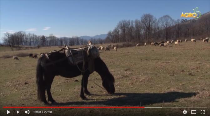 За изконния поминък под Балкана – животновъдството (ВИДЕО)