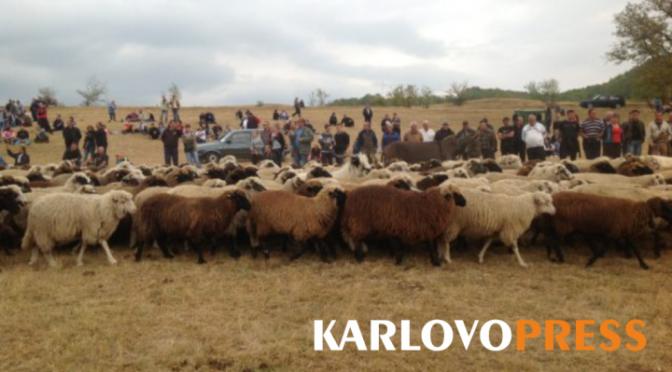 Калофер посрещна стотици гости на 13-тия събор за опазване на българските породи животни (ВИДЕО)