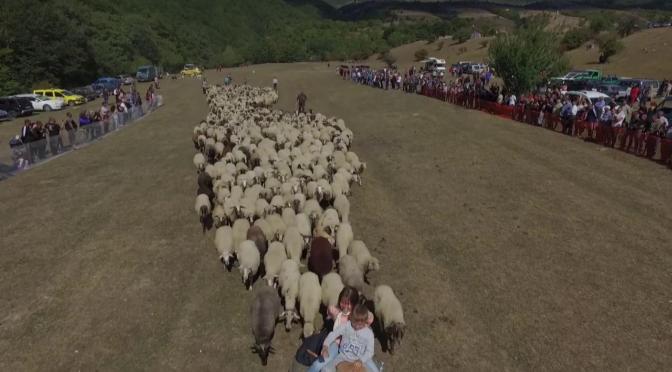 В Калофер по традиция дефилираха местни български породи животни